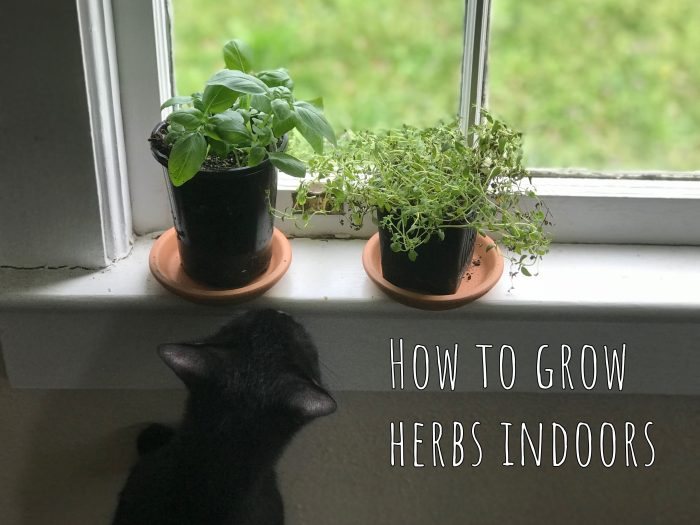 How to grow your own food indoors, part I: Herbs