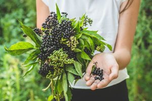The Evidence on Elderberries